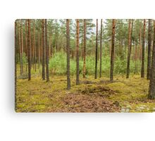 Trees in forest Canvas Print