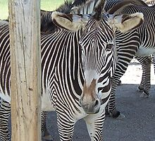 Pardon, Your Stripes are Showing by Monnie Ryan