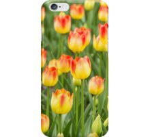 Tulips in the spring time iPhone Case/Skin