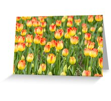 Tulips in the spring time Greeting Card