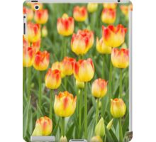 Tulips in the spring time iPad Case/Skin