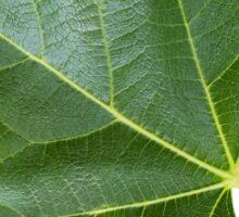 The Leaf Of Fig Tree triptych Sticker