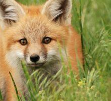 Fox kit Sticker