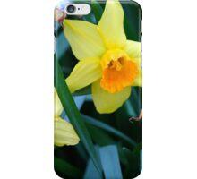 Fortune Daffodils iPhone Case/Skin