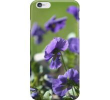 blue pansy flowers macro shot iPhone Case/Skin