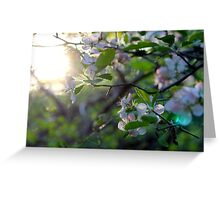 Sunlight Through Prairie Crabapple Blossoms Greeting Card