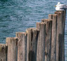 Two Seagulls Sticker