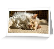 Afternoon Snooze Greeting Card