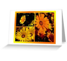 Africian Daisies Greeting Card