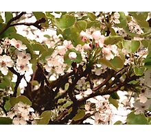 Flowers of the evening sun. Photographic Print