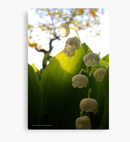 Convallaria Majalis - Lily Of The Valley Flower Filled With Sunrise | Melville, New York Canvas Print