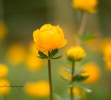 Yellow bud by Yannik Hay
