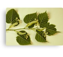 Basswood Leaves And Flowers Canvas Print