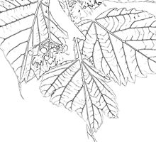 Artsy Basswood Leaves by Sandra Foster