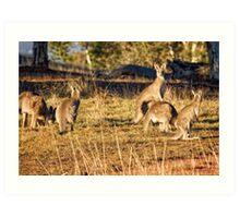 Sunrise at the Pinnacle in Canberra/ACT/Australia Art Print