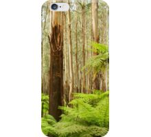 Tree ferns and trees iPhone Case/Skin
