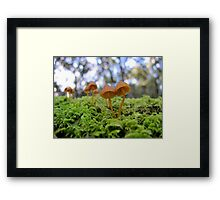 Forest Redheads Framed Print