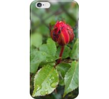 rosebud in the rain iPhone Case/Skin