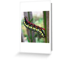 Caterpillar's Lunch - Macro Greeting Card