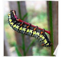 Caterpillar's Lunch - Macro Poster