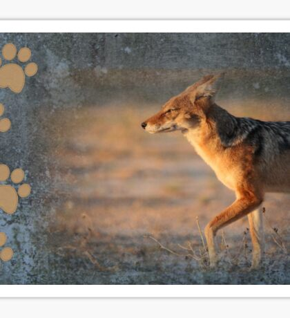 Black-backed Jackal Sticker