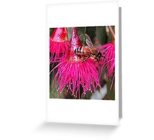 Bee Food - Flowering Red Gum - Macro  Greeting Card