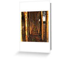 Treelined Sugar Gums - Macro Greeting Card