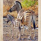 Mother and Baby Zebra by Jennifer Sumpton