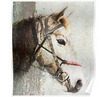 A horse called Meggs Poster