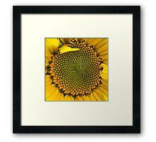 Sunflower - Macro Framed Print