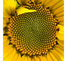 Sunflower - Macro Photographic Print