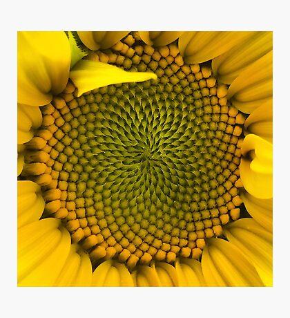 Sunflower - Macro Photographic Print