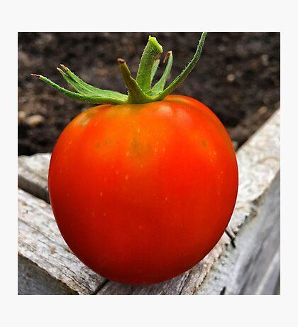 Ripe and Ready Tomato  Photographic Print