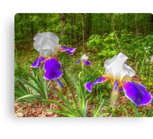 Bi-color Iris Blooms And Buds Canvas Print