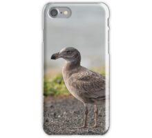 Juvenile Pacific Gull (Seagull) iPhone Case/Skin