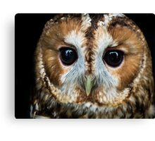 Close up of an owl Canvas Print
