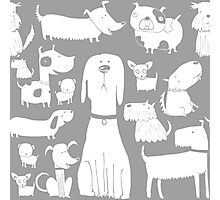 dog - grey Photographic Print