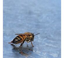 Reflection of a Bee Photographic Print