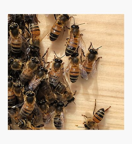 Bees and their Hive Photographic Print