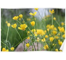 Buttercup Poster