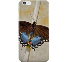 Spice Bush Swallowtail iPhone Case/Skin
