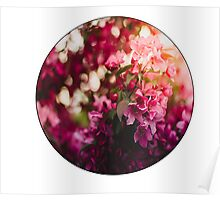 Warm Floral Poster