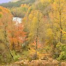 Autumn in the Highlands by Stephen Frost