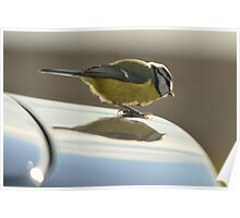 Blue Tit, a new logo on my car? Poster