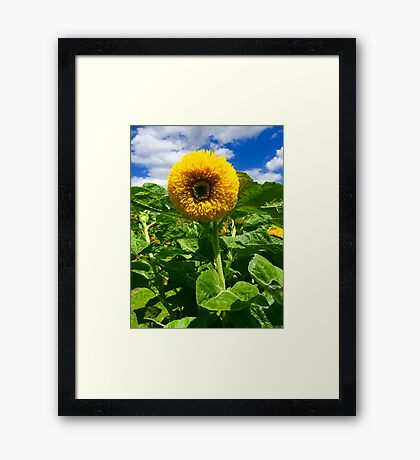 """Joyful"" - Original Artist's Photograph  Framed Print"