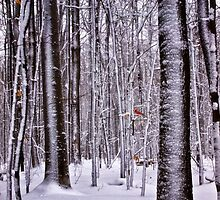 Winter in the Woods - Erie, PA by Kathy Weaver