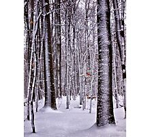 Winter in the Woods - Erie, PA Photographic Print