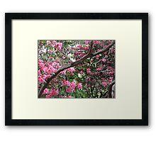 Sunshine and Pink Framed Print