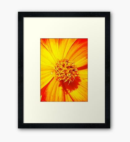 """Flowerburst"" - Unique Original Artist's Floral Photograph! Framed Print"