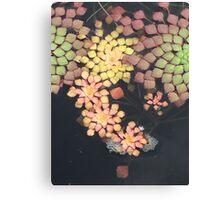 """Mosaic"" - Original Artist's Photograph Canvas Print"